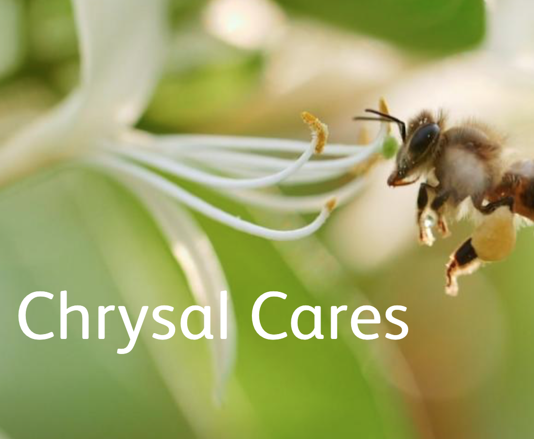bee plants chrysal cares